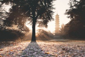 sunrise over pagoda and frosty leaves from an autumn oak tree at kew gardens