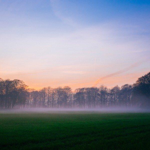 Wiltshire Fog
